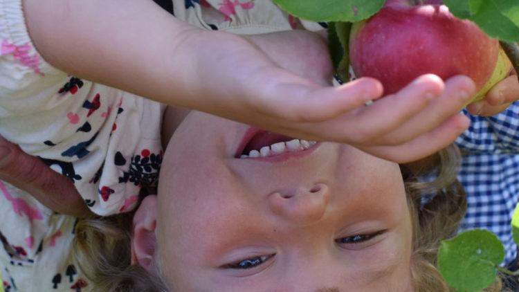 OWOCOWY DZIEŃ DZIECKA – konkurs on-line dla dzieci